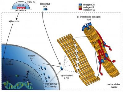 PNAS figure 8.jpg